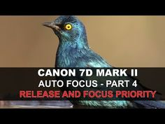 Canon 7D Mark II Auto Focus - Part 4/5: Release and Focus Priority - YouTube
