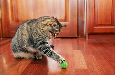 Play keeps cats' minds active and helps to prevent boredom.