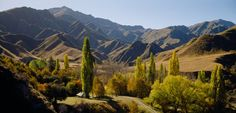 Arrowtown, near Queenstown NZ, in Autumn, i could take pictures here all day, colour colour colour! Aspen, Colour Colour, Colours, Central Otago, New Zealand Landscape, Deciduous Trees, Ballroom Dance, South Island, Where The Heart Is