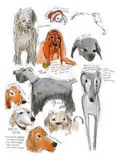 """any dog-lover would relate to MacNaughton when she writes, """"I don't know any of the dog owners' names, but I know all their dogs.'"""""""