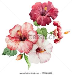 hibiscus, object, painting - stock vector