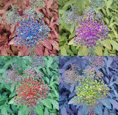 """""""Flower"""" by Iris Einfeldt  http://www.isisicefieldgallery.com/2013/07/flower-by-iris-einfeldt.html  #photo #color #flower #neon #rain #photoart #pink #blue #berry #leaf #green #art #fineart #waterdropf #black #purple #orange #hd #red"""
