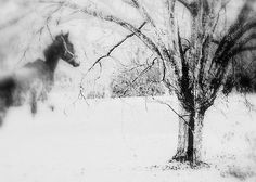 snow horse, photo by Marie Monroe | at Redbubble