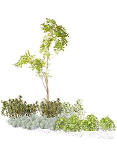 ナチュラルでさわやかな庭02 Landscape Sketch, Landscape Elements, Landscape Design, Architecture Collage, Architecture Graphics, Landscape Architecture, Trees Top View, Tree Photoshop, Tree Identification