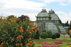 Château de Schönbrunn : Greenhouse in the gardens- don't miss it- its on the far end of the Sissy gardens