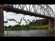 senzational 100 de persoane se arunca de pe un pod Pod