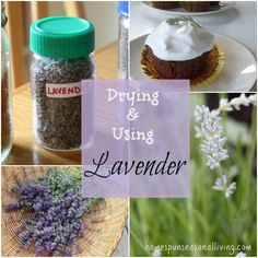 & Using Lavender Drying & using lavender is simple and useful for culinary and medicinal purposes.Drying & using lavender is simple and useful for culinary and medicinal purposes. Growing Lavender, Growing Herbs, Uses For Lavender Plant, Lavender Cake, Lavender Garden, Healing Herbs, Medicinal Plants, Permaculture, Plantar