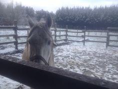 cantinero en la nieve
