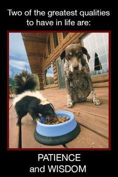 16265803_10154513686951339_7903965368259536955_n.jpg (480×720) #dogsfunnyhilarious