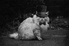the cat and a top hat <3