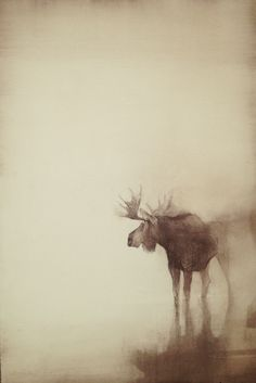 """Wonder"" 22 x 14 conte on arches by Kathryn Mapes Turner. 