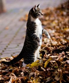 Kitty + crunchy leaves = perfect combination