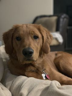 Little man is 6 months now. Hes growing up so fast Golden Retriever Dogs and Puppies Cute Puppies, Cute Dogs, Dogs And Puppies, Baby Dogs, Doggies, Animals And Pets, Cute Animals, Dogs Golden Retriever, Family Dogs