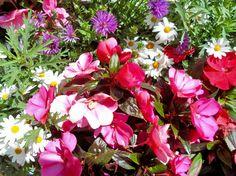 Flowers in Rønne, Bornholm, Denmark.