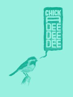 chickadee.