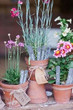 rustic potted plants wedding seating plan ideas / http://www.himisspuff.com/potted-plants-wedding-decor-ideas/10/