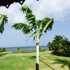 Four Seasons Resort Nevis, 5/15/15