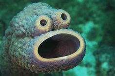 Diver Mauricio Handler and his wife found this sea sponge while they were swimming around the reefs of Curacao in the Caribbean. | There Is A Sea Sponge That Looks Like Cookie Monster