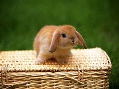 Bunny on a basket!  19 other photos of baby animals in baskets!