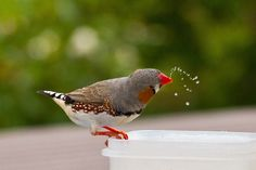 Zebra Finch, Finches, All Gods Creatures, Seashells, Drinking Water, Dog Love, Mother Nature, Birds, Heart