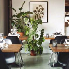 Dalfsen - Mooirivier @heidikruize Modern Restaurant, Hotels, Instagram Posts, Plants, Plant, Planets