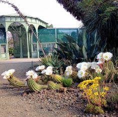 Explore The Ruth Bancroft Garden's photos on Flickr. The Ruth Bancroft Garden has uploaded 1704 photos to Flickr.
