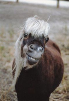 A nerdy-looking horse smiling at the camera with huge bangs in its face... can we do a beauty shot like this of Dale in our history movie? @Dani Blain haha :)