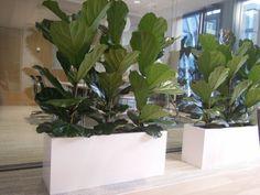 Interiérové truhlíky Plants, Plant, Planets