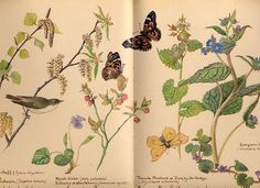Edith Holden's Writings and Drawings from April 1906 Country Diary of An Edwardian Lady Edith Holden, Botanical Flowers, Botanical Prints, Decoupage, Nature Sauvage, Watercolor Sketchbook, Botanical Drawings, Flower Drawings, Nature Journal