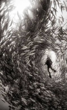 This is cool but I'll pass out with all them fish around me with no where to run or swim to!
