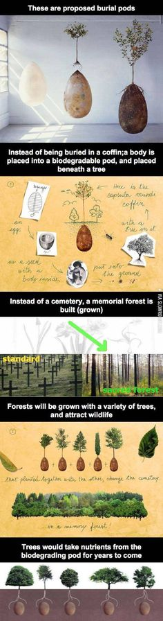 Do you want a haunted forest? Because that's how you get a haunted forest.>>> I would do it, just to be a part of a haunted forest, that'd be awesome. I Look To You, The More You Know, Good To Know, Weird Facts, Fun Facts, Random Facts, Random Stuff, Haunted Forest, When I Die