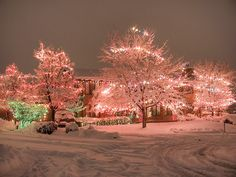 Pink Christmas Lights in Snow / - - - Bookmark Your Local 14 day Weather FREE > www.weathertrends360.com/dashboard No Ads or Apps or Hidden Costs