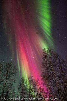 Backyard Aurora, Fairbanks, Alaska