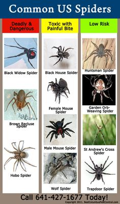 USA common spider identification chart  good to know