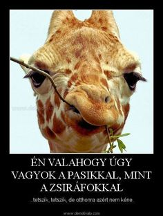 I love giraffes! Sarcastic Humor, Funny Jokes, Smiley, Haha, Funny Pictures, History, Memes, Cute, Animals