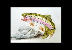 Beautiful RAINBOW TROUT Fish Fishing Colored by MySalvagedPast