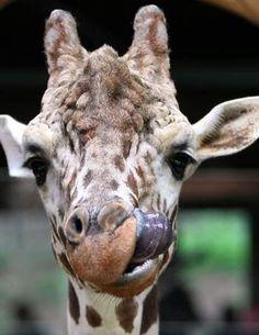 Henry Doorly Zoo marks 1 millionth  visitor for '12 / Omaha, NE