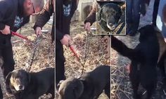 Bear, a senior dog, is finally free after he spent 15 years chained up to a dog house. Heartwarming video shows a local animal rescue group cutting his chain after he was tied to a doghouse.