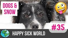 Dogs playing in the snow for the first time * Happy Sick World No. 36