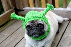 Pickles the Etsy Hat Model... I want to pin them all, but I will resist!