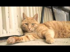 Louis, the Wells Cathedral Cat