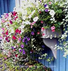 Spectacular windowbox spotted in Nova Scotia