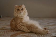 There are cats. And then, there are awkwardly sitting cats — balancing themselves delicately with feline bums firmly planted on the floor, chair, bed, what Funny Cat Memes, Funny Cats, Funny Animals, Cute Animals, Funny Cat Pictures, Cute Animal Pictures, Hilarious Pictures, Cats Bus, Cats And Kittens