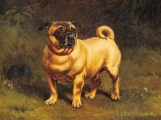 William H. Hopkins was an English artist that created this oil on canvas painting called Pug in 1880.