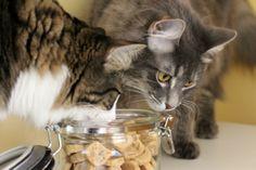 Tuna Heart Cat Treats (pawesomecats.com)