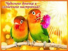 Good Morning Gif, Parrot, Animals, Google, Cooking, Animais, Parrot Bird, Animales, Animaux