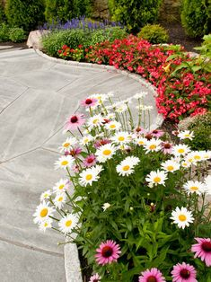 Shasta daisies, coneflowers, and, I'm thinking that may be begonias, and purple salvia.  A fantastic border. Great use of color concentration and size recognition.