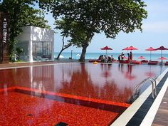 the red pool at Library hotel
