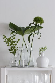 fresh white and forest green. Indoor plants and cactus. An assortment of different house plants and foliage. Green rooms and rooms with potted plants. Indoor Garden, Indoor Plants, Home And Garden, Potted Plants, Green Plants, Green Flowers, Cut Flowers, Grand Vase En Verre, Decoration Plante