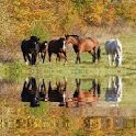App name: Horse Reflect   Live Wallpaper. Price: 0.69€. Category: . Updated: December 4, 2011. Current Version: 1.1. Requires Android: 2.1 and up. Size: 0.57 MB. Content Rating: Everyone.  Installs: 100 - 500. Seller: . Description: horse reflectIn this live wall  paper  Wallpaper setting for a  ll phone sizes, including Tabl  et size.Option to change wallp  aper frames per second between    .